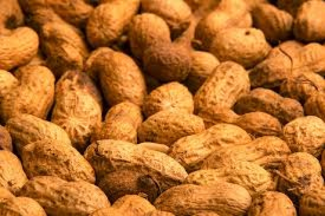 Peanuts helps relax and widen blood vessels, thus increasing blood flow throughout the body.