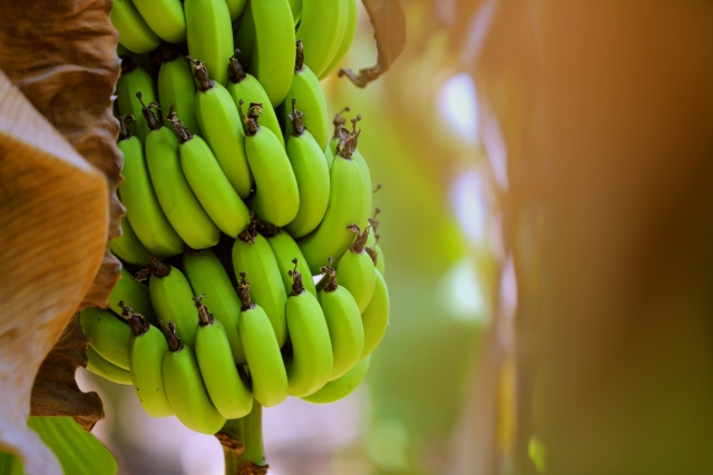 Loaded with vitamin C, vitamin A, vitamin B6 and Potassium, raw bananas are excellent for your heart's health.