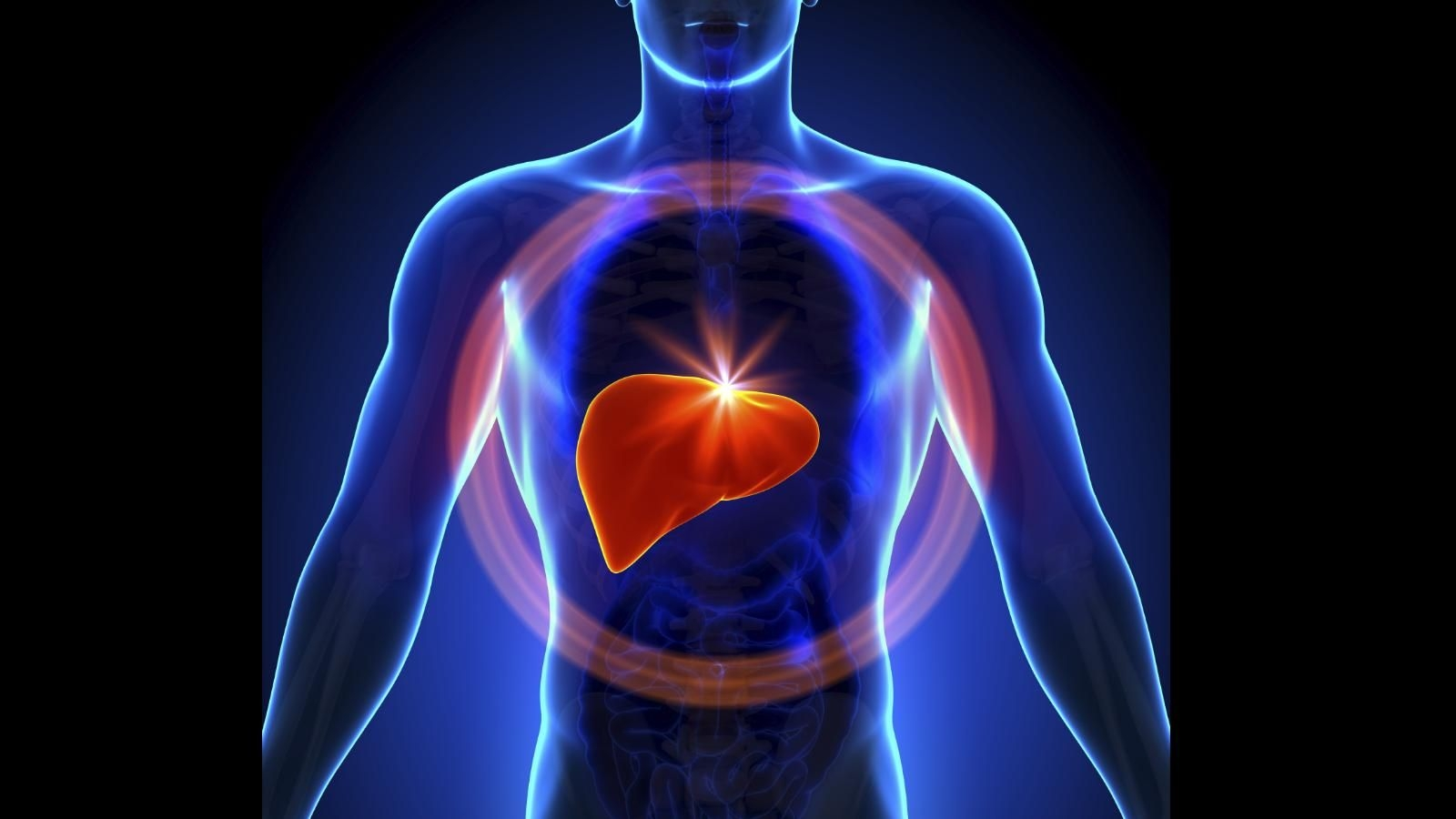 Zinc Oxide Supplements May Prevent Fat Build up in Liver: Study