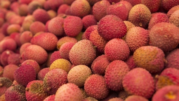 Litchi contains a toxin called MCPG, which can lead to a drop in sugar levels of malnourished children