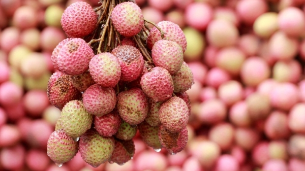 Litchi has still not been proven as the real culprit behind encephalitis deaths in Bihar.