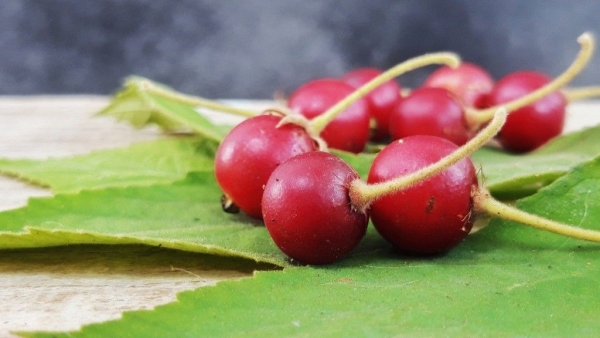 The aratiles or Jamaican cherry has antioxidants to cure type 2 diabetes.