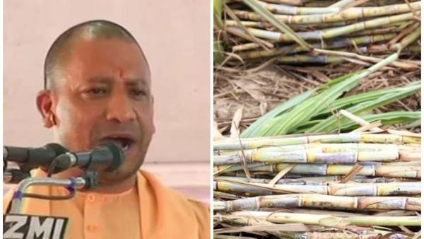 सीएम योगी ने यूपी के किसानों को गन्ने की बजाए अन्य फसलों के उत्पादन की सलाह दी है.