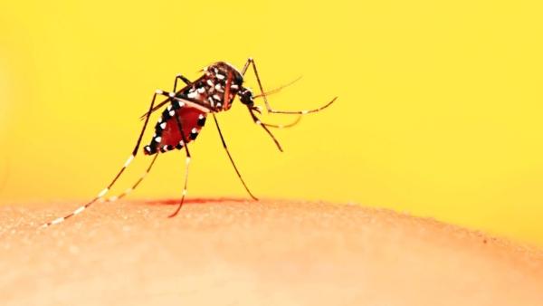 पिछले कुछ दिनों से डेंगू के साथ मलेरिया के मामले देखे जा रहे हैं