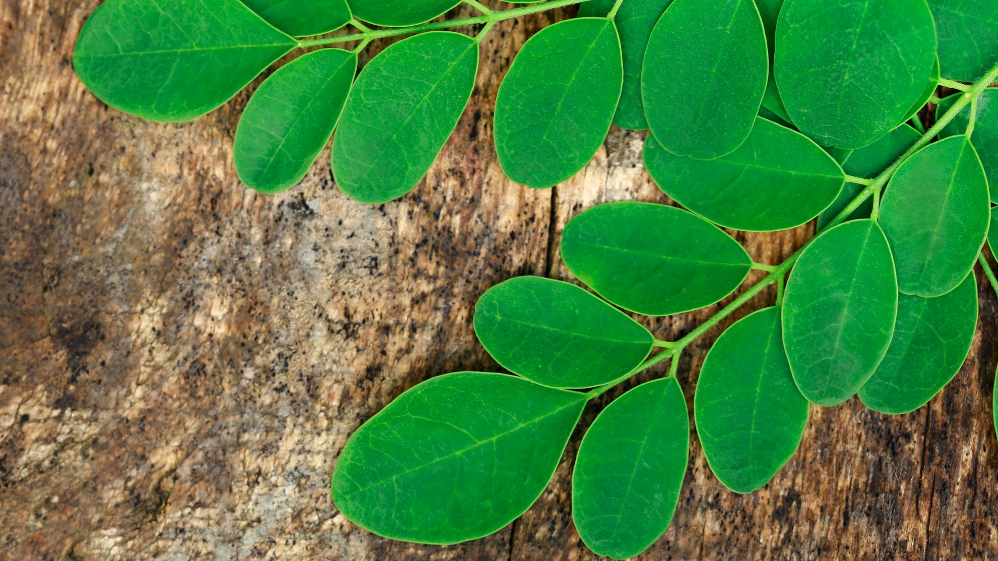 Here Are Seven Reasons Why Moringa Is the Superfood We All Need