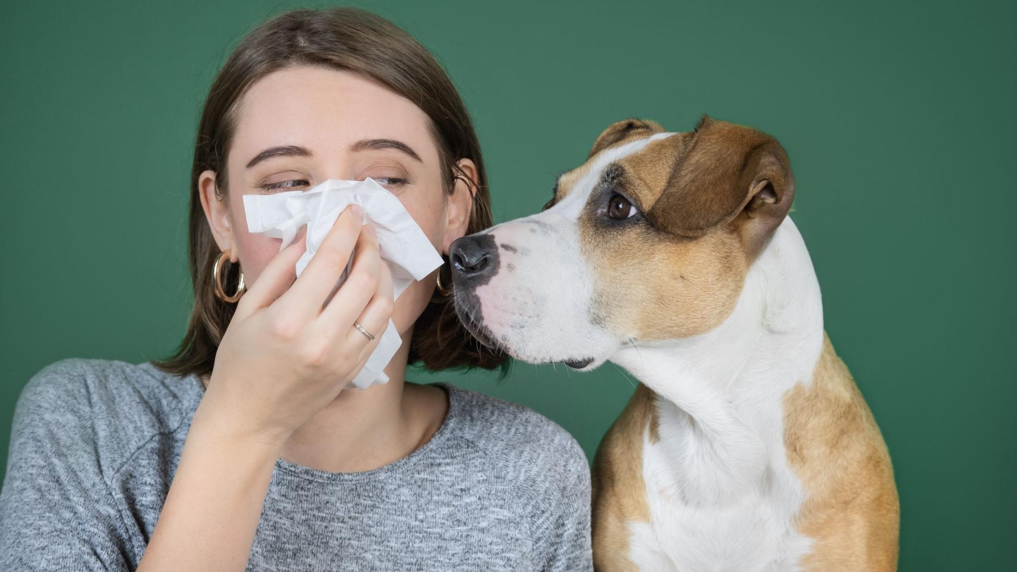Can Your Dog Catch the Coronavirus?