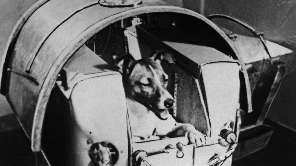 dog in space apollo - photo #4