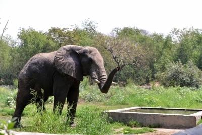 Emaciated 70-yr-old Sri Lankan elephant dies