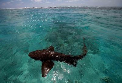 Australian court bans Great Barrier Reef shark cull