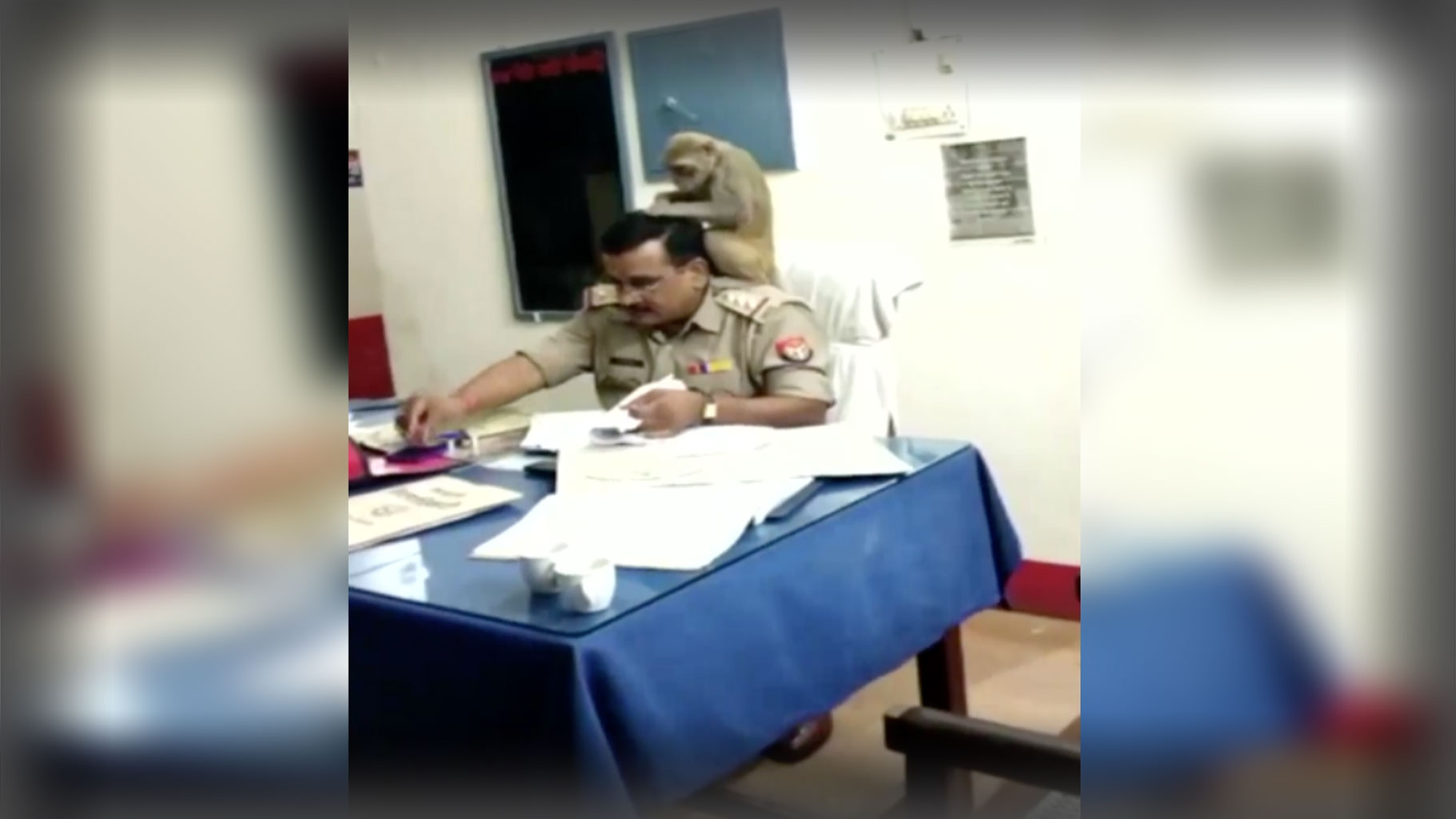 Video of Monkey Cleaning Lice From UP Cop's Hair Goes Viral