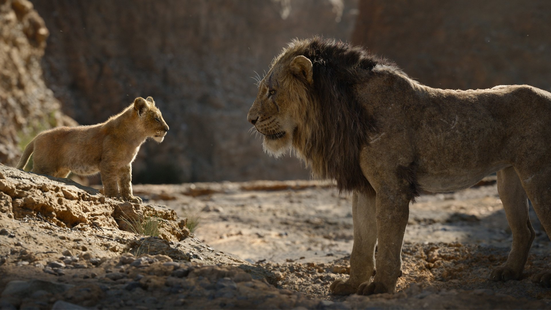 Stars to Join 'The Lion King' Virtual Premiere on Disney+ Hotstar