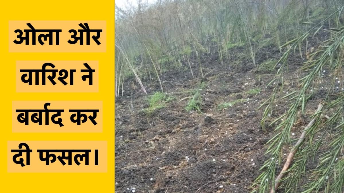 Heavy Hailstorm in Bundelkhand crops destroyed