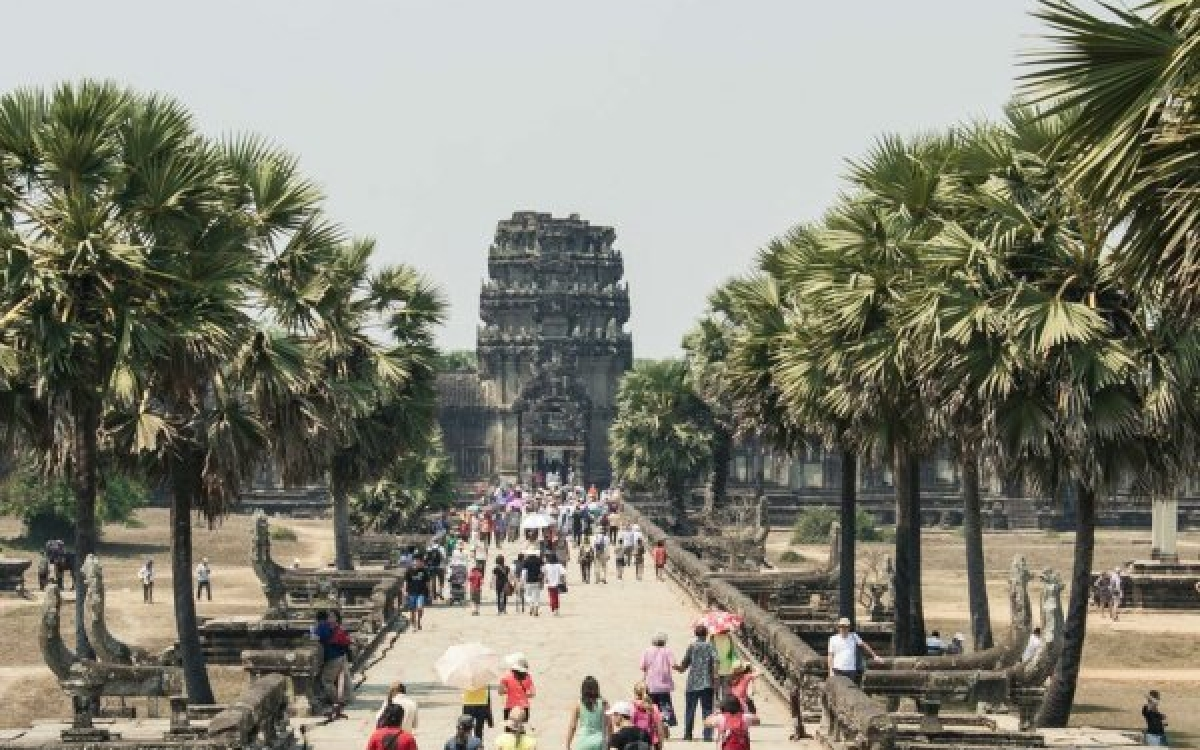 `தமிழ்நாடு கத்துக்கணும்!' பனைமர பாதுகாப்பில் அசத்தும் கம்போடியா