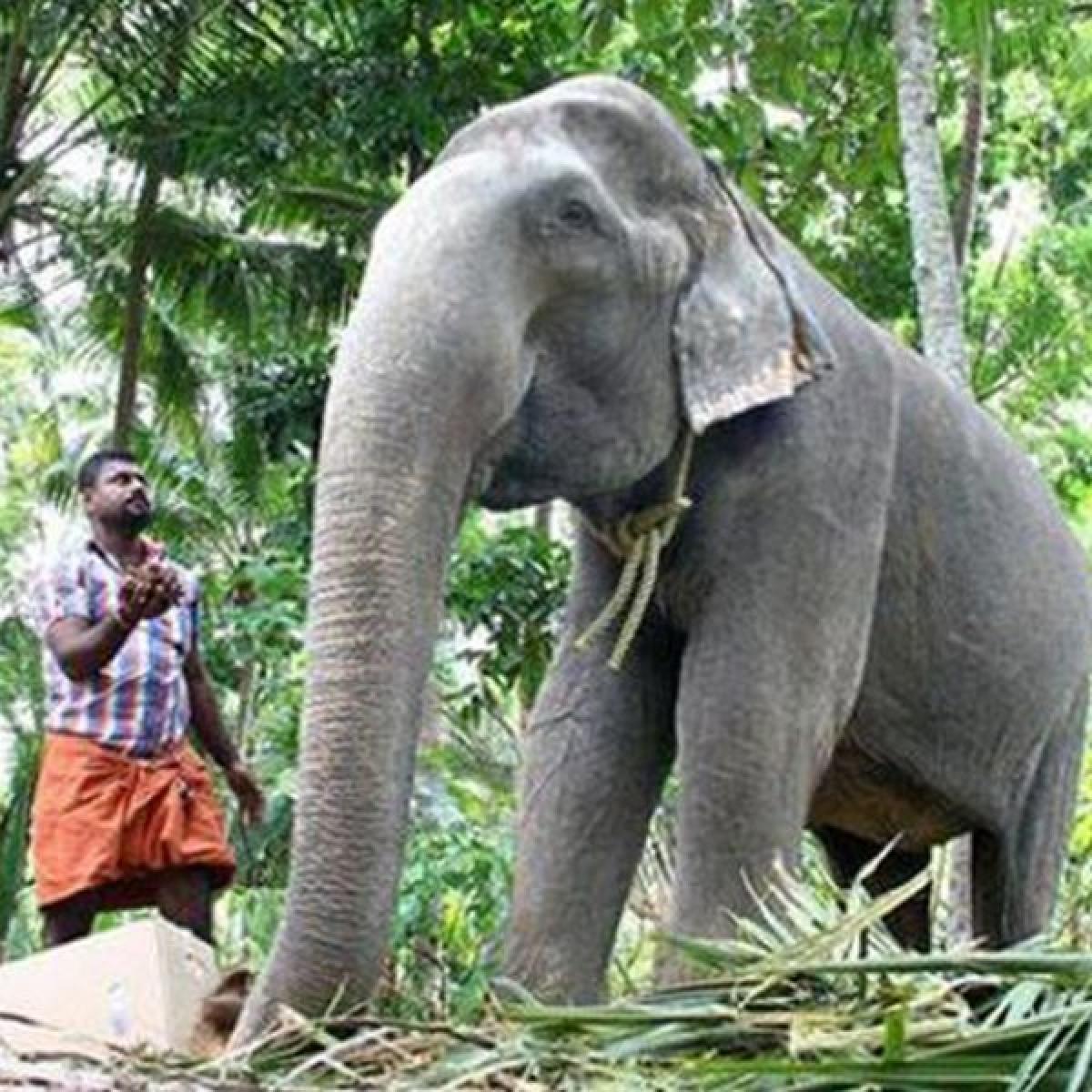கின்னஸில் இடம்பிடித்த பெண் யானை தாக்ஷாயணி 87 வயதில் மரணம்!