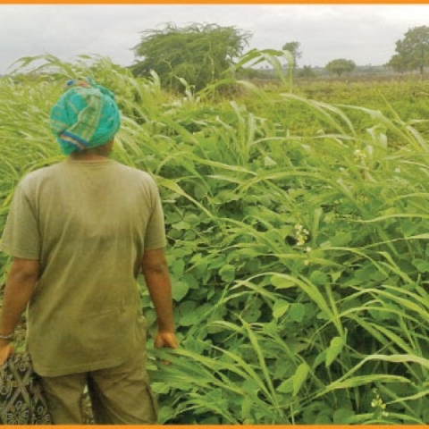 From farmer's land to vegetable market    Must know info about agri