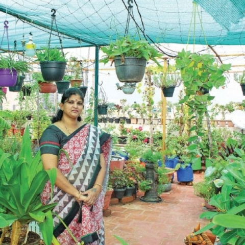 Vegetables to Flowers...Value of Terrace Garden!