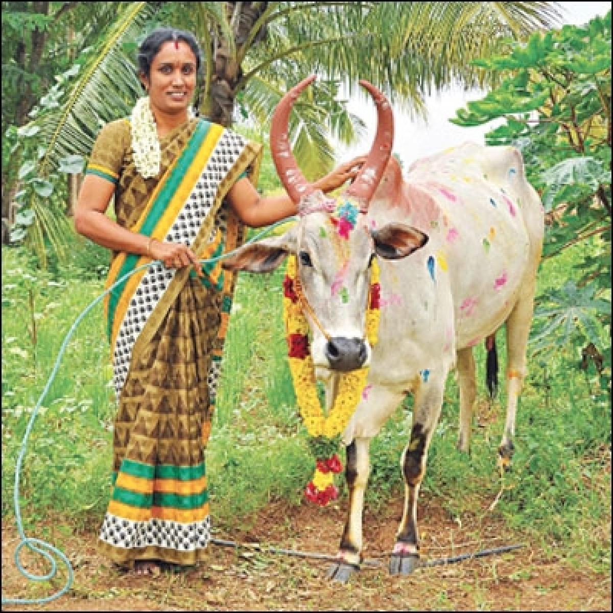 அவள் கிளாஸிக்ஸ்: ``இது பசு இல்ல... எங்களை வாழவைக்கும் மூத்த குடி!''
