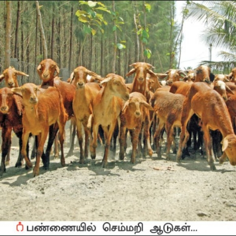 Annual income of ₹10,00,000 from 200 livestock    Wonderful