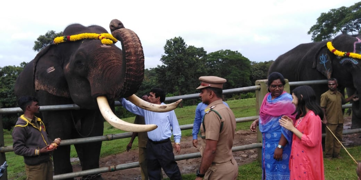 Camp elephants