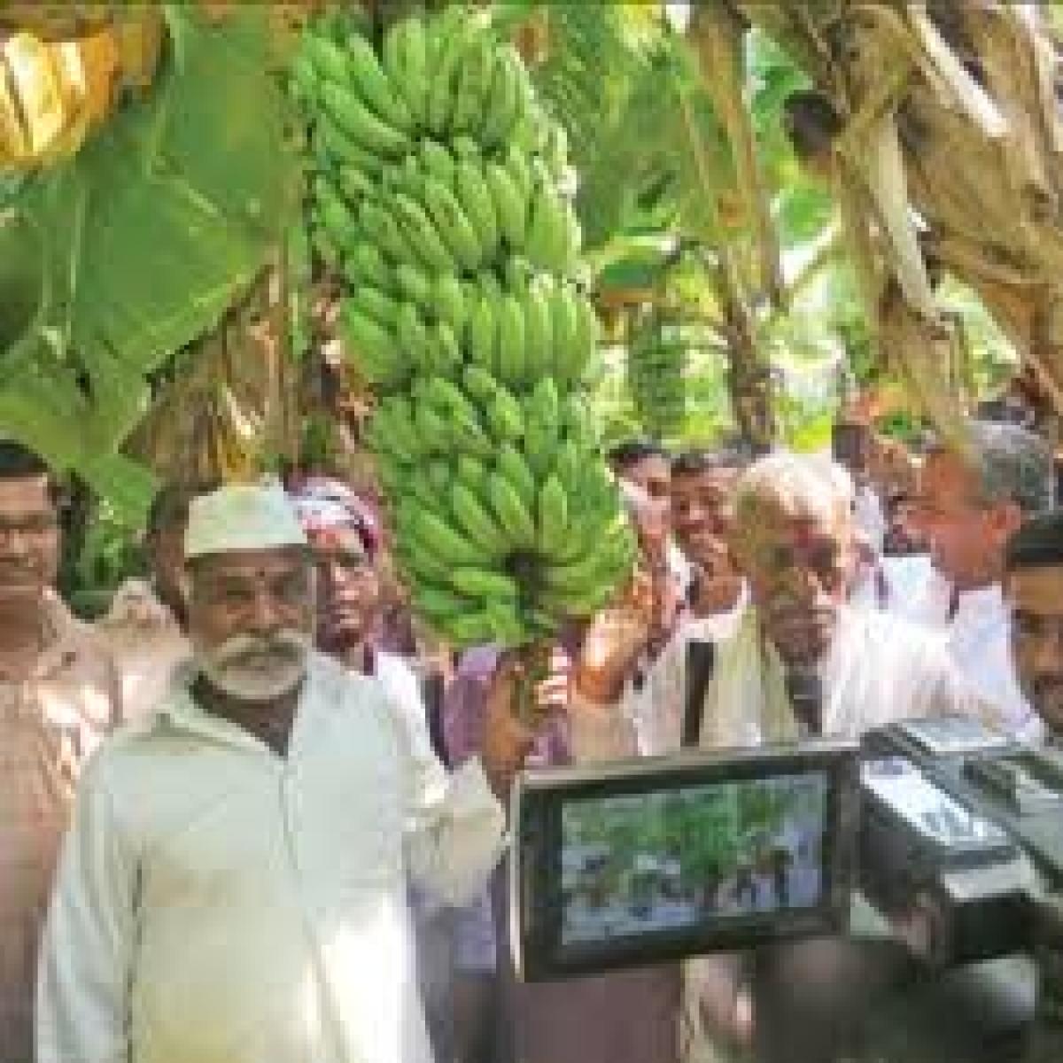 Zero Budget Farming