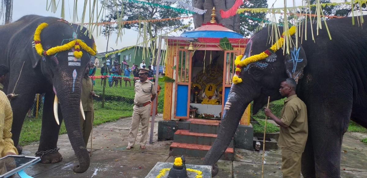 Masini and Krishna Elephants
