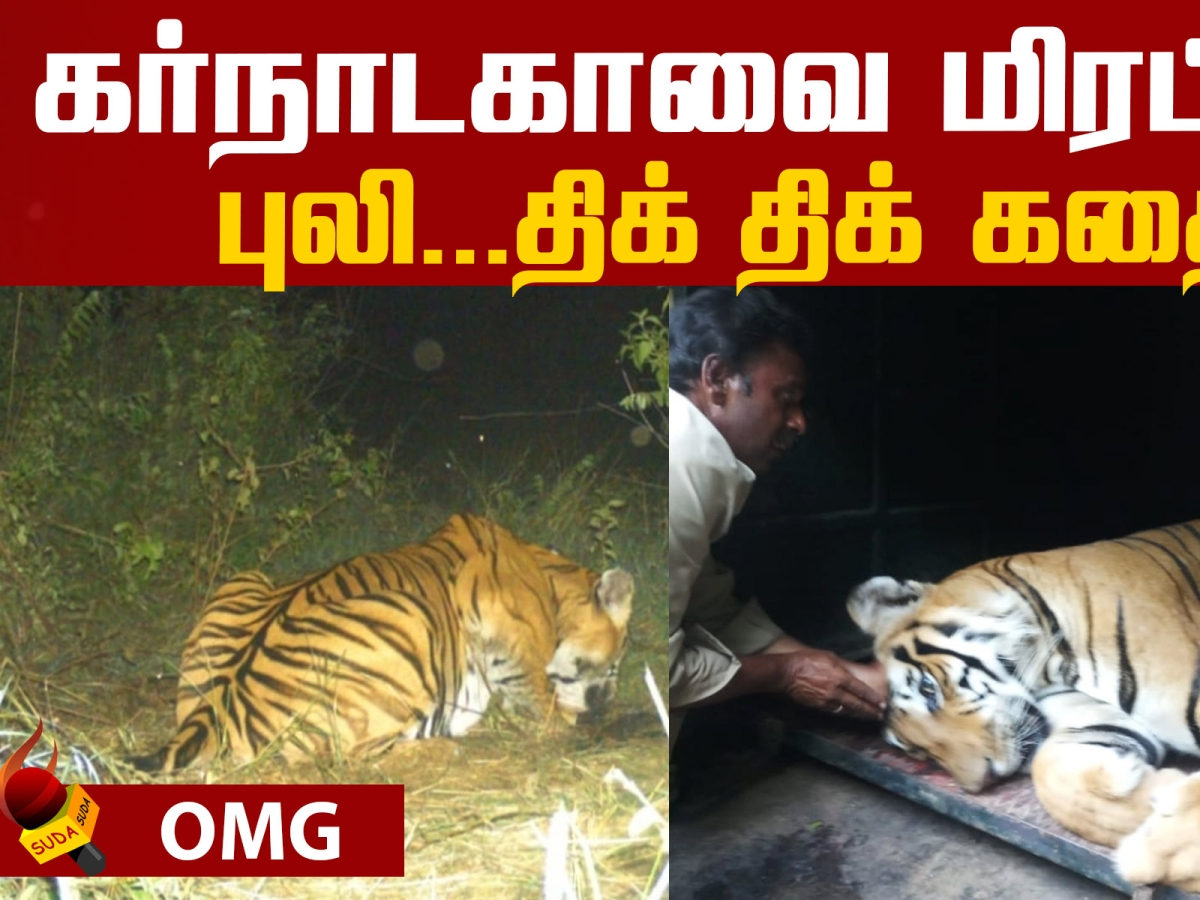 An Unimaginable Story of a tiger!