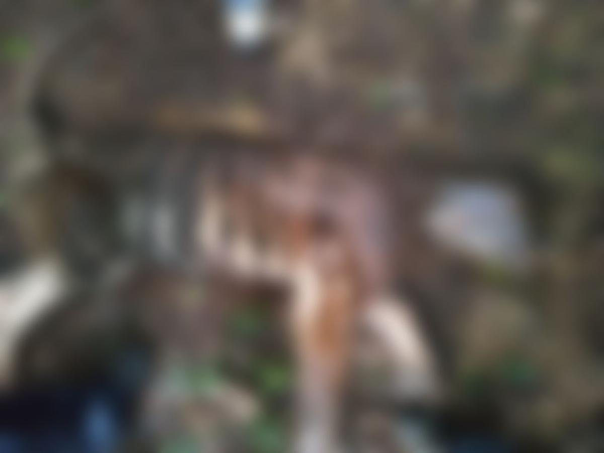 `8 வருடமாக ஒரே இடத்தில் வேலை; தொடரும் புலிகள் இறப்பு'- டிரான்ஸ்பர் சர்ச்சையில் மேகமலை வனத்துறை!