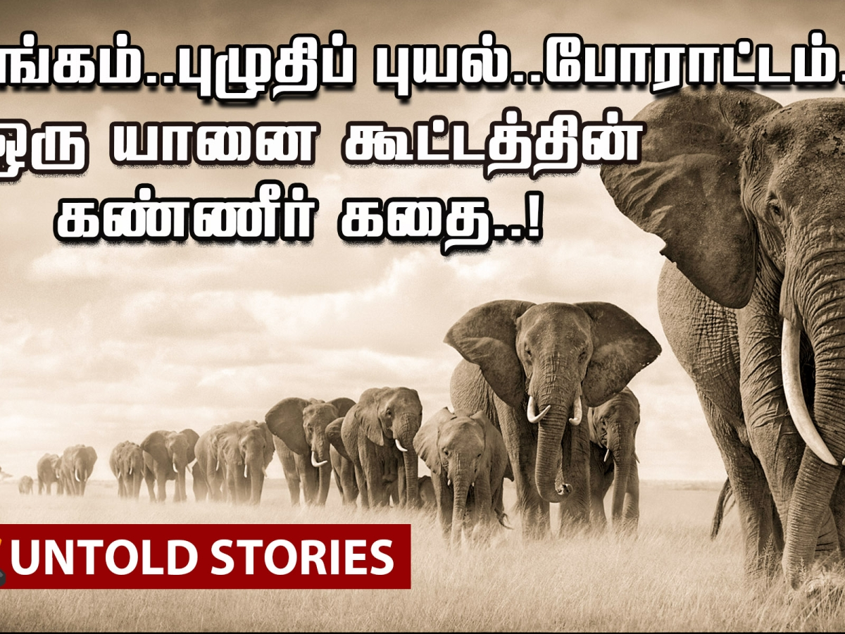 An Unimaginable Journey of Elephants!