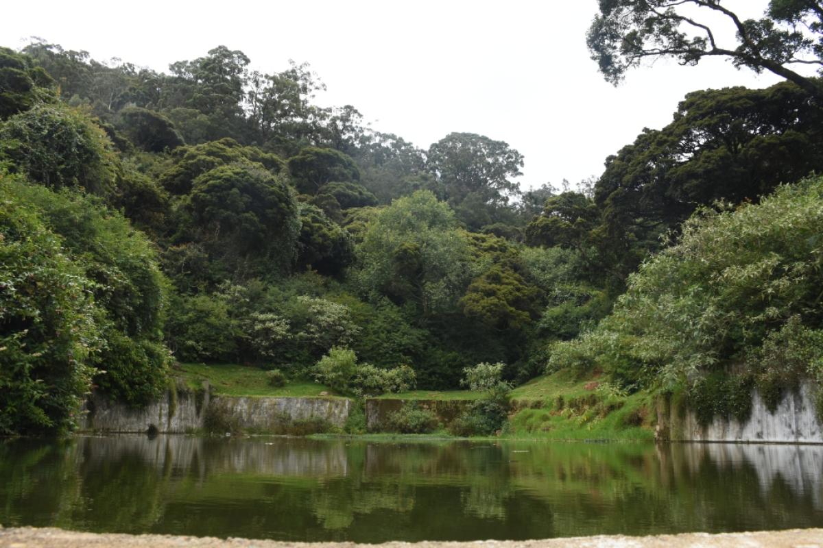 தொட்டபெட்டா சரிவு பகுதியில் ஓடையாக உருவாகி வரும் நீர்