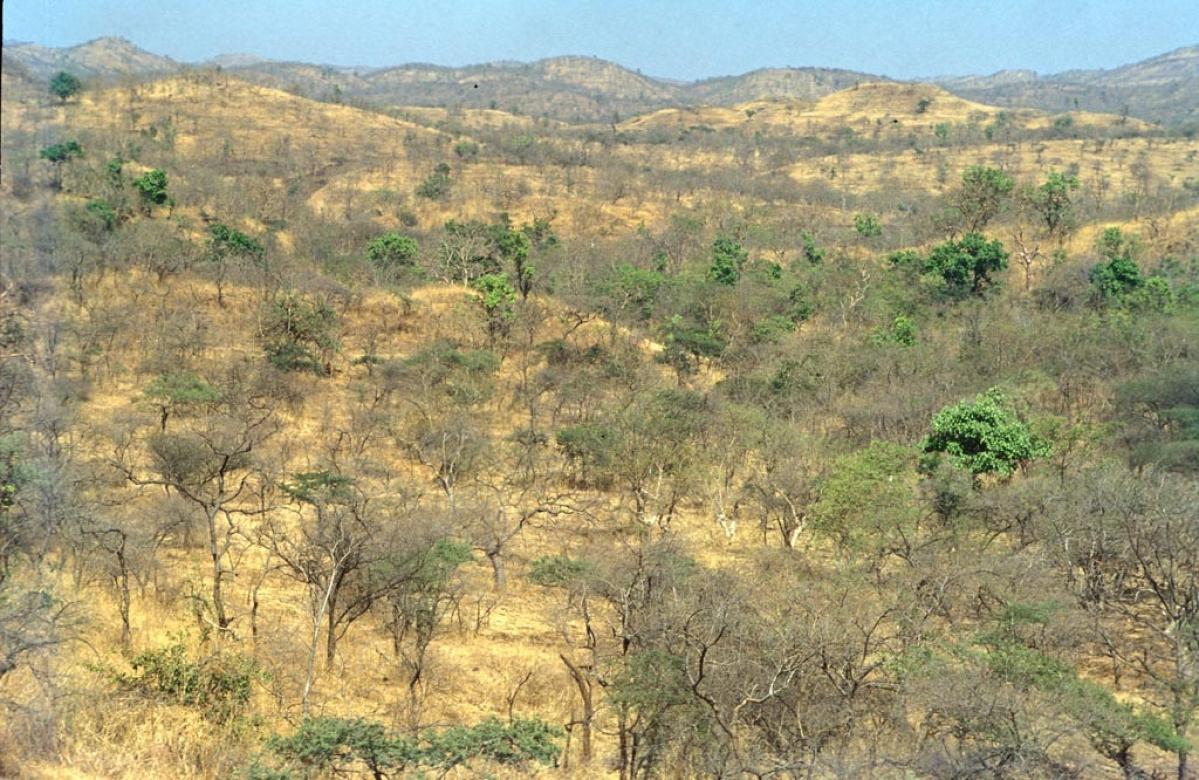 கிர் காடு, குஜராத்