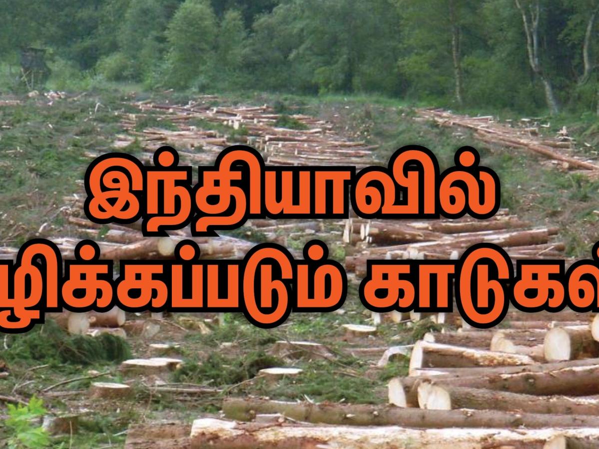 இந்தியாவில் அழிக்கப்படும் காடுகள்