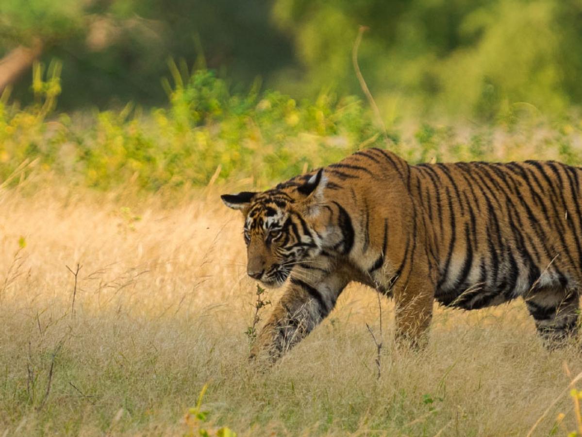 கட்டுக்கடங்காத காட்டுயிர் வேட்டை... அதிரவைக்கும்  அஜி பிரைட் நெட்வொர்க்!