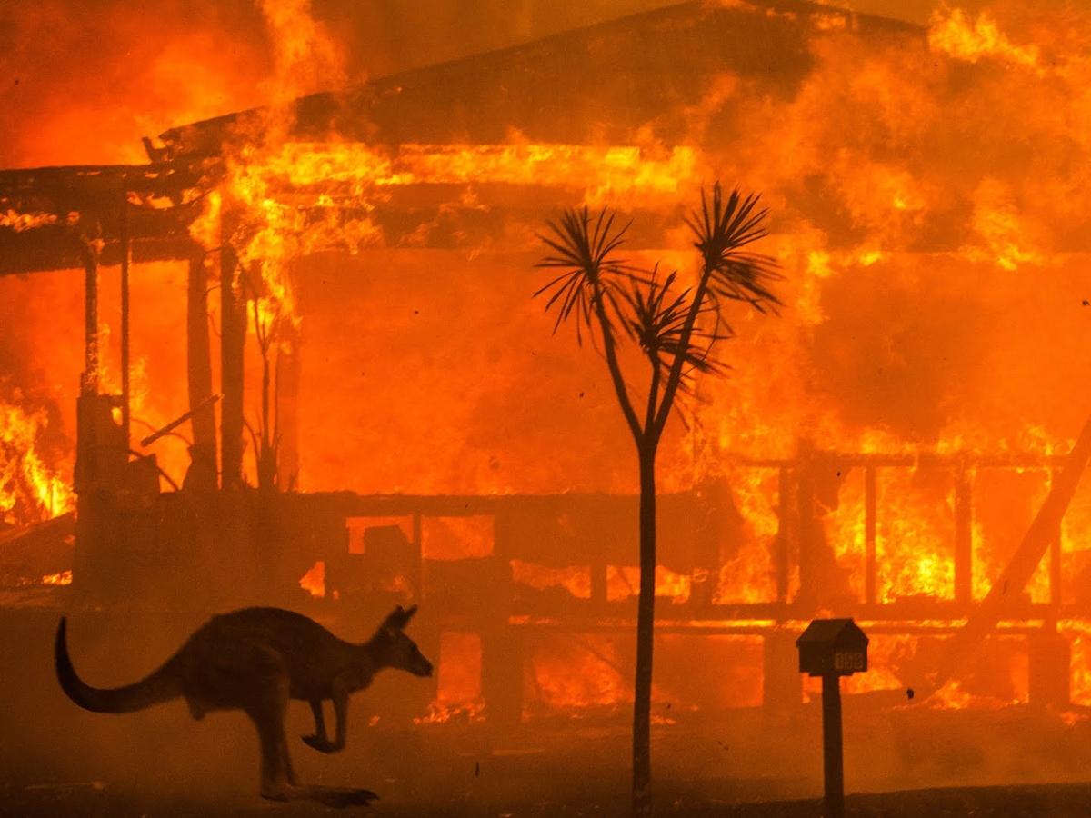 `இன்ஸ்டா மாடல் முதல் 6 வயது சிறுவன் வரை!' - ஆஸ்திரேலியாவை அரவணைத்த கரங்கள் #bushfirecrisis