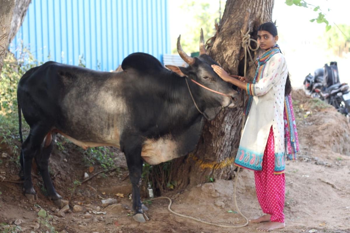யோக தர்ஷினி - காளையுடன்