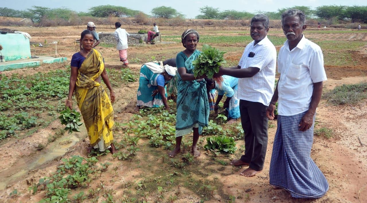 `கிராமத்துக்கான காய்கறிகள்... இது, ஊரடங்கு தந்த மாற்றம்!' -அசத்தும் சிவகங்கை மாவட்ட ஊராட்சி
