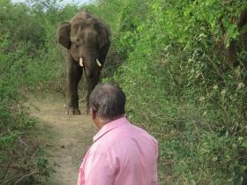 Elephant: `யானைகளுக்கும் எல்லா எமோஷன்களும் இருக்கு!' - அனுபவம் பகிரும் டாக்டர் அசோகன்