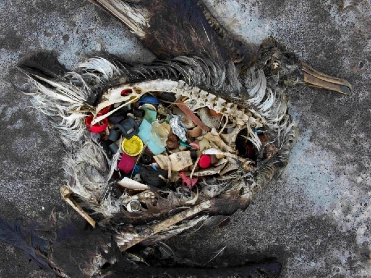 The Global Crisis of Plastic Pollution